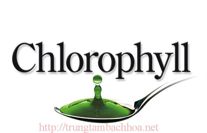 DIệp lục tố Chlorophyll
