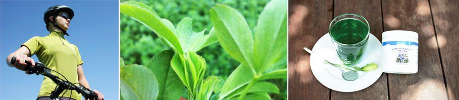 Thành phần Chlorophyll của unicity