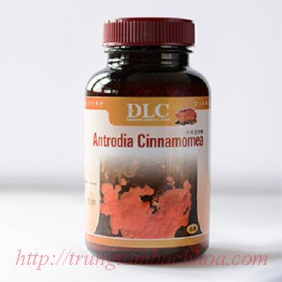 DLC Antrodia Cinnamomea Hỗ trợ điều trị bệnh lý về Gan