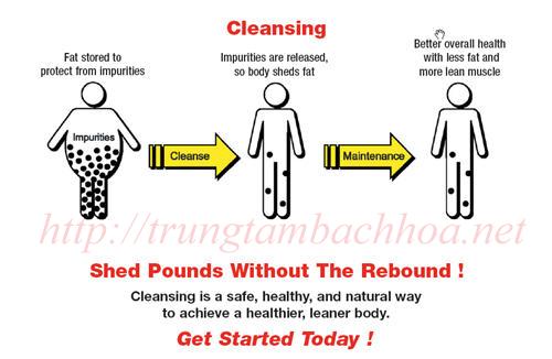 _Quy trình làm sạch cơ thể để đào thải độc tố