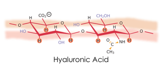 Cấu trúc Axit Hyaluronic