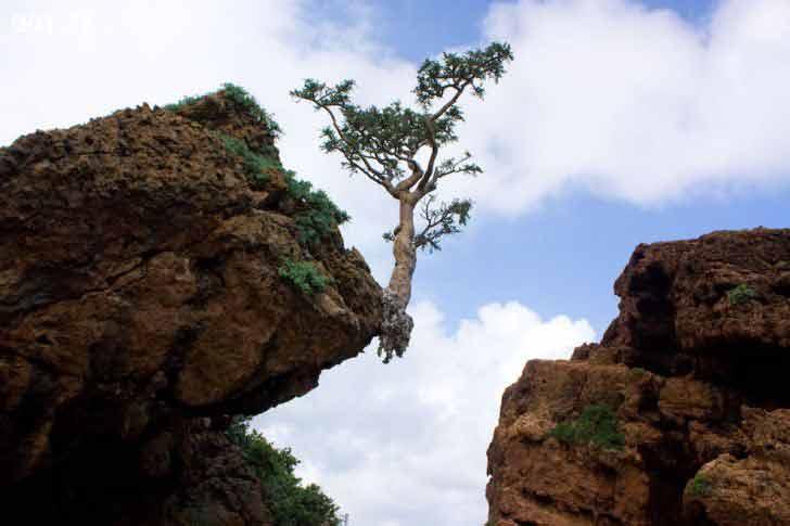 Sức sống mãnh liệt của cây bên tảng đáSức sống mãnh liệt của cây bên tảng đá